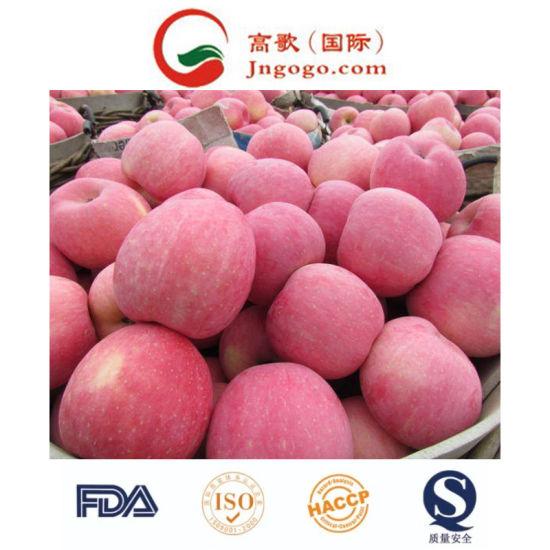 New Crop Chinese FUJI Apple