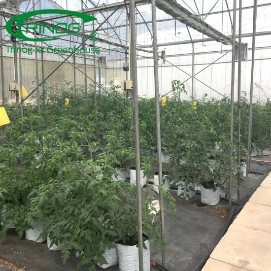 Commercial used large size tomato Greenhouse for hydroponic farm