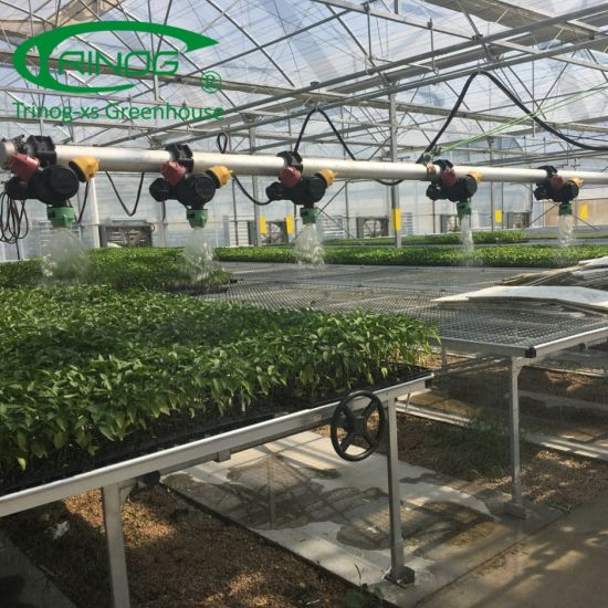 Multi-Span Film Commercial Flower Greenhouse for hydroponic farm