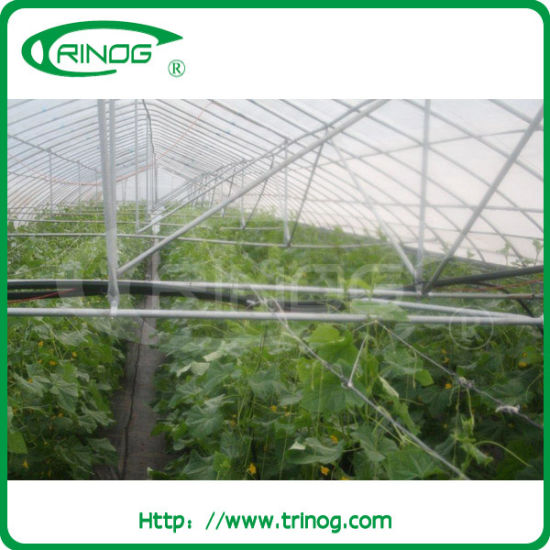 Galvanized steel structure tunnel film greenhouse for commercial