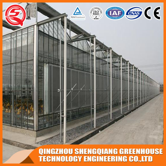 Commercial Multi-Span Garden Tempered Glass Greenhouse