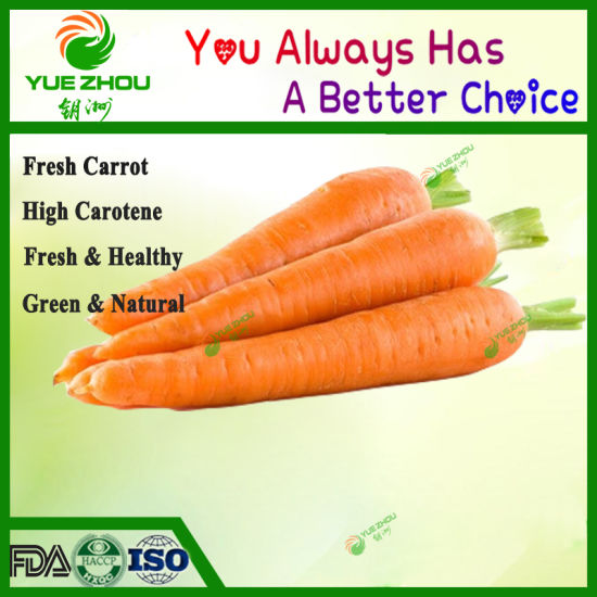 Fresh Chinese Carrot S/M/L Size for Exported pictures & photos
