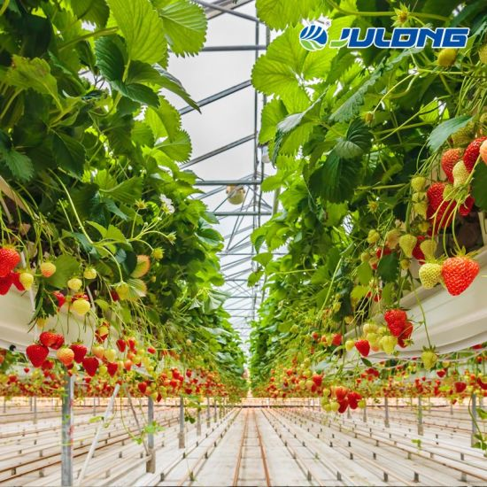 Agricultural Aquaponic Strawberry Multispan Film Green House Farm for Sale