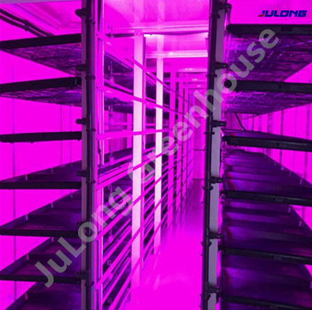 Agricultural Hydroponics System Container Greenhouse for Lettuce/Spinach/Cabbage/Green Leafy Vegetables