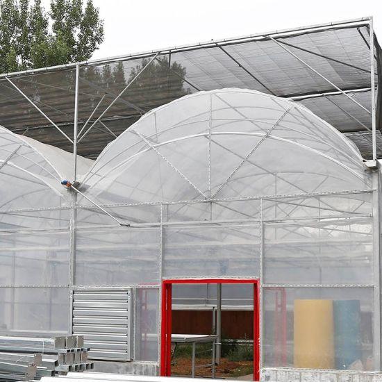 Plastic Film Greenhouse for Vegatable Flower Fruit