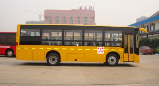 Hot Sale China School Bus of Sinotruk with Best Quality