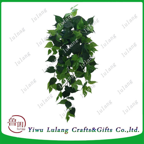 china artificial boston fern seeds vines climbing bonsai plants for