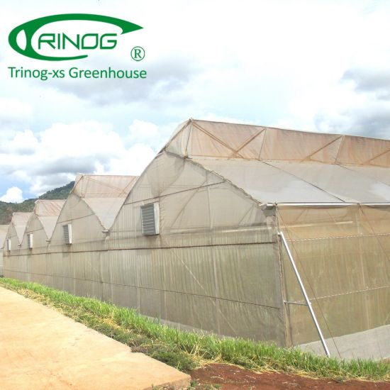 Fixed roof vent insect net green house for cucumber hydroponics