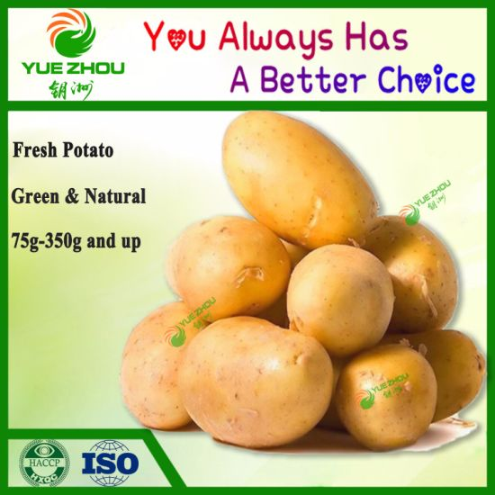 2019 Hot Sell Chinese Fresh Potato 80-150g with Cheap Price