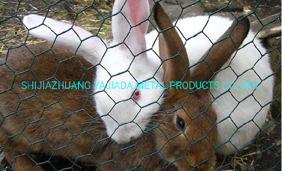 PVC Coated Iron Wire Netting for Rabbit Cage