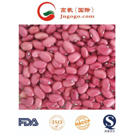 Top Quality New Crop Red Kidney Beans pictures & photos