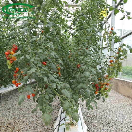 China Commercial NFT substrate hydroponics system for greenhouse