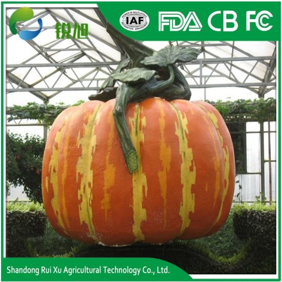 China large outdoor theme park playground vegetables pumpkin