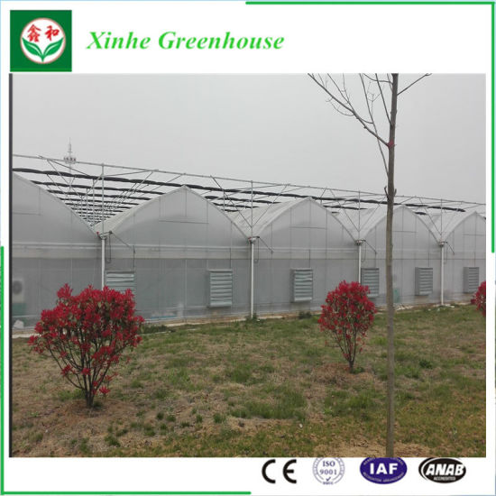 Best Ing Commercial Muti Span Plastic Greenhouse For Vegetable Growing