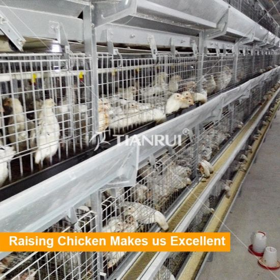 Hot Galvanization Poultry Farm Layer Day Old Chicken Cage