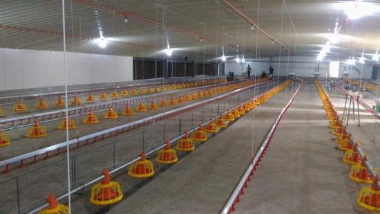 Modern And Advanced Chicken Farm Equipment For Broiler Breeder Layer