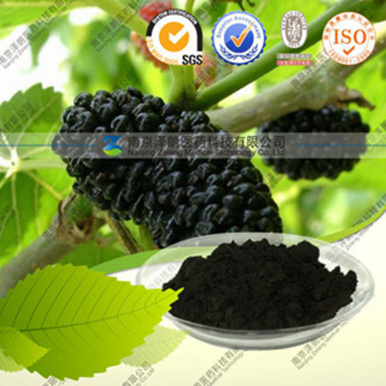 Factory Direct Supply Natural Mulberry Fruit Extract pictures & photos