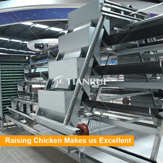 Galvanized Steel A Frame Automatic Layer Chicken Battery Cage