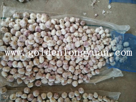 2016 New Season Fresh Red Garlic pictures & photos
