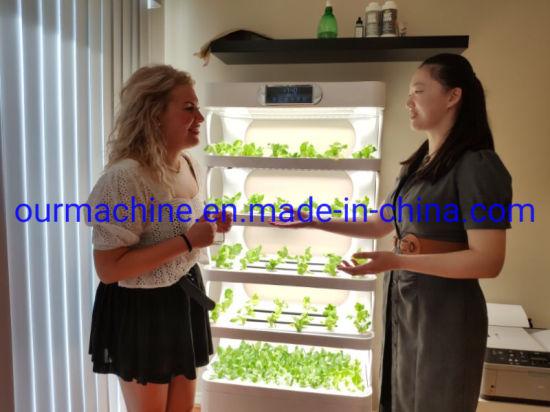 Indoor Hydroponics Vegetable Growing System Vertical