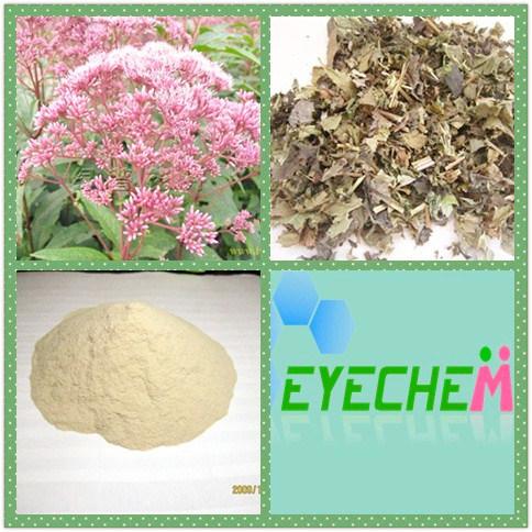 Lycoposes 80% Lupeose 80% Stachyose Hirsute Bugleweed Extract 4: 1 10: 1