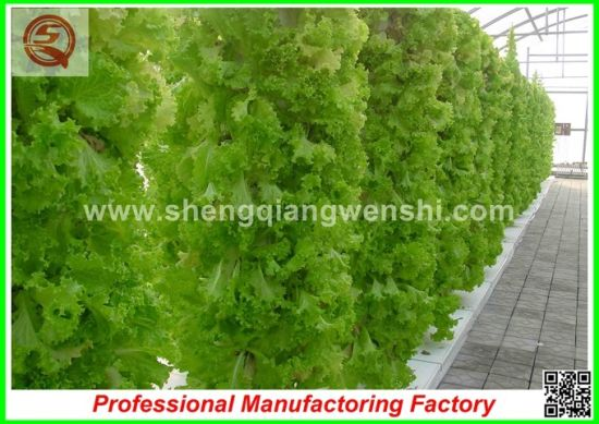 Polyethylene Film Single-Span Greenhouses for Agriculture/Commercial