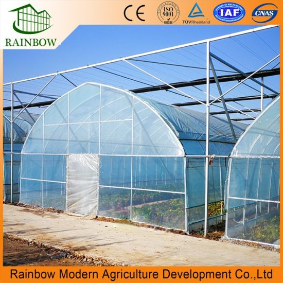High Competitive Agricultur Single-Span Arch Type Film Garden Greenhouse with Hydroponics Growing System for Agriculture/ Poultry/ Vegetables/ Tomatoes/ Seeding