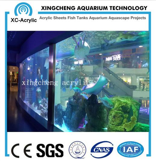 Transparent Acrylic Fish Tank of Marine Aquarium