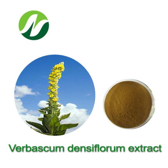 High Standard 4: 1~20: 1 Verbascum Densiflorum Extract