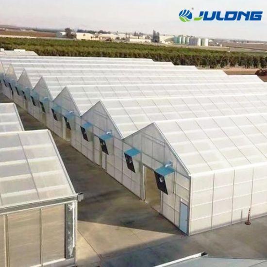 Hot Sale Vertical Aeroponics System Polycarbonate Greenhouse
