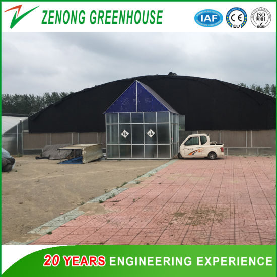 High Quality Factory Wholesale Large Span Plastic Film Greenhouse for Seedbreeding/Garden Planting
