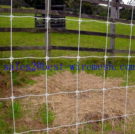 Fixed Knot Deer Fence/Metal Deer Fence pictures & photos