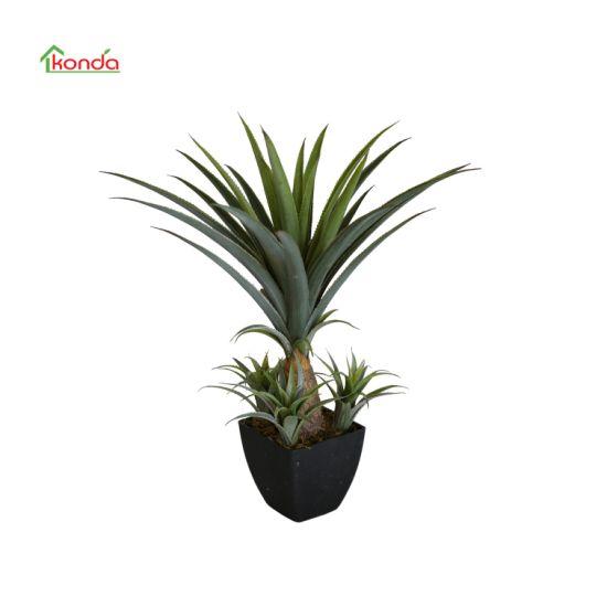 Best Popular Succulent Plant Live Agave for Home Garden Nursery