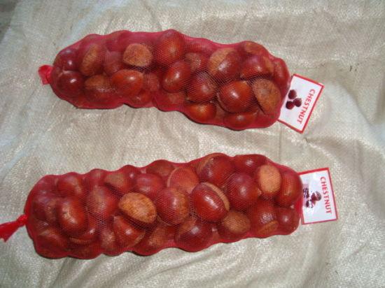 Export Professional Europe Chinese Fresh Chestnut