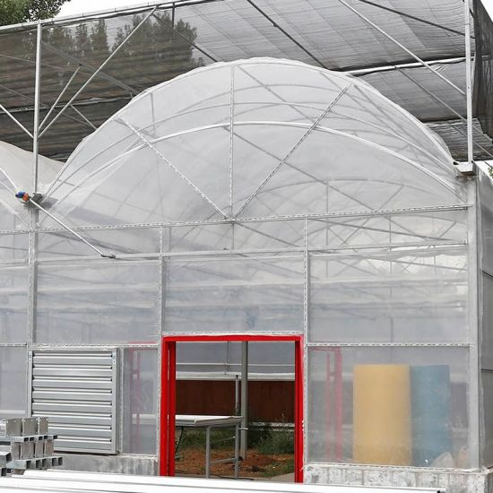 Multi-Span Agricultural Plastic Film Greenhouses for Planting Vegetables with Hydroponic Systems