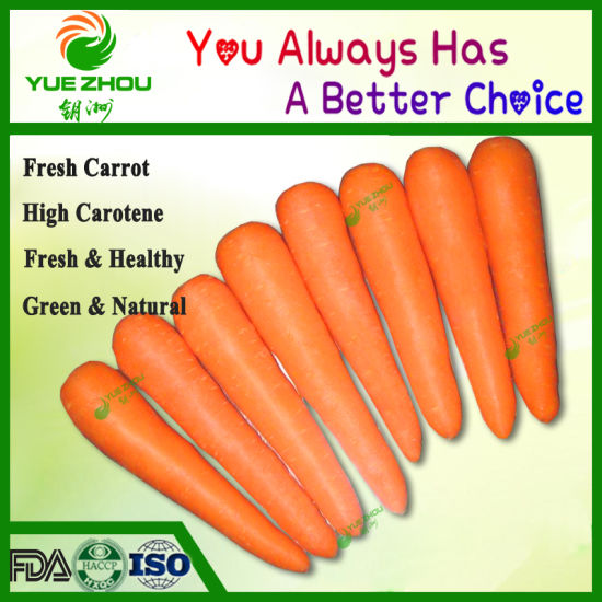 2019 Top Sale Carrot Fresh Vegetable with High Quality pictures & photos