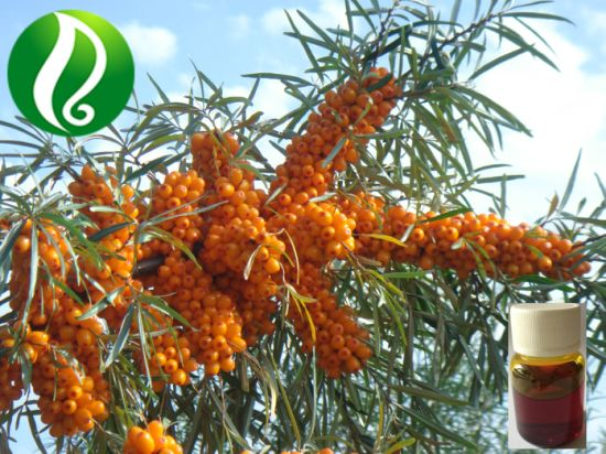 High Omega 7 Organic Seabuckthorn Berry Oil pictures & photos