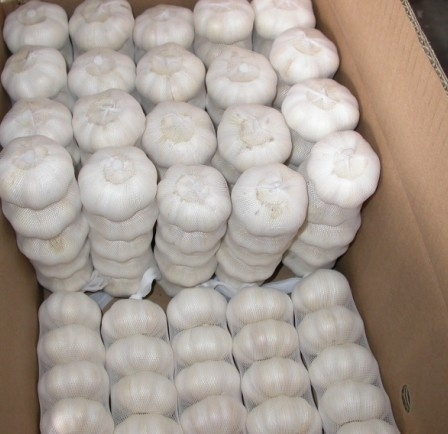 Chinese Export Good Quality Pure White Garlic pictures & photos