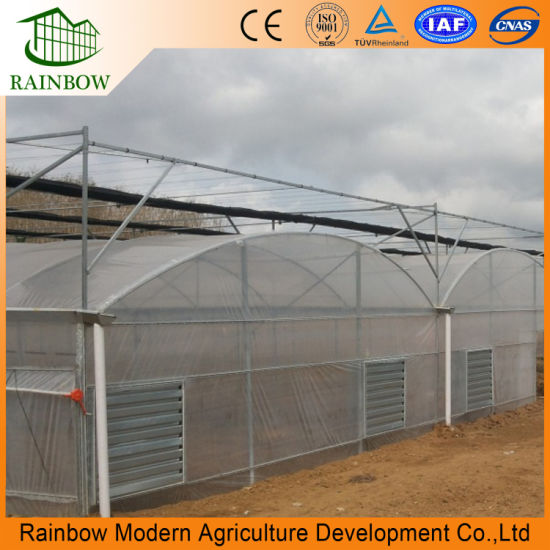 Versatile Multi-Span Poly Film Greenhouse for Agricultural