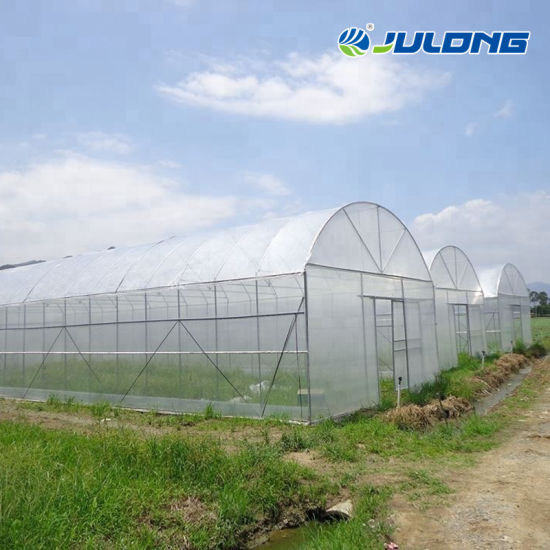 Hot Sale Factory Price Agricultural Po Film Greenhouse with Soilless Culture for Lettuce/Chilli/Cucumber Planting