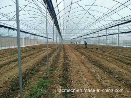 Watermelons in a greenhouse made of polycarbonate. Cultivation of watermelons