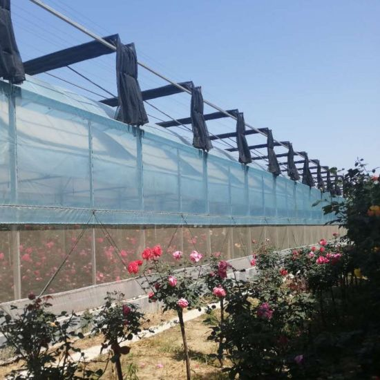 Chinese Factory Agricultural Film Greenhouse with Shading System