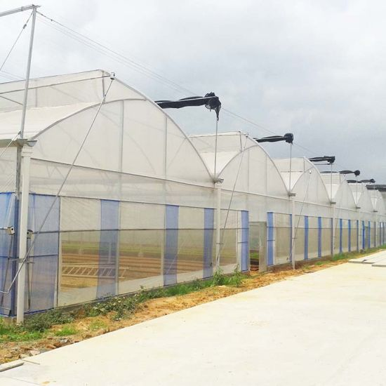 Double Arch Double Film Vegetable Greenhouses/Po Film Greenhouse