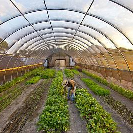 Intelligent Plastic Film Greenhouse for Vegatable Flower Fruit