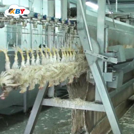 Strange China Muslin Halal 500 10000Bph Chicken Slaughtering Download Free Architecture Designs Rallybritishbridgeorg