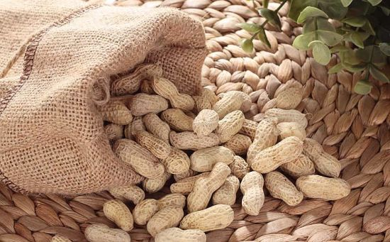 Export Good Quality Fresh Chinese Peanut pictures & photos