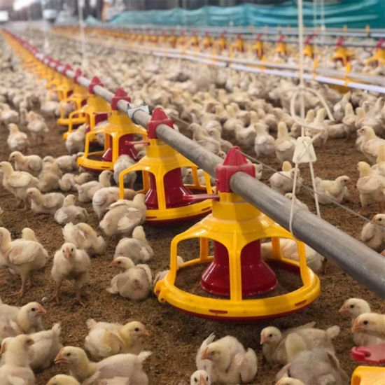 Automatic Poultry Feeder Pan Feeding System Equipment for Broiler Chicken