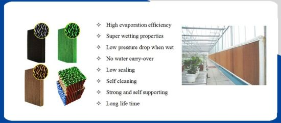 Agricultural Equipment Wet Curtain Cooling Pad for Green House pictures & photos