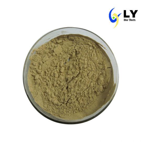 100% Natural Bulk Powder Astragalus Root Extract