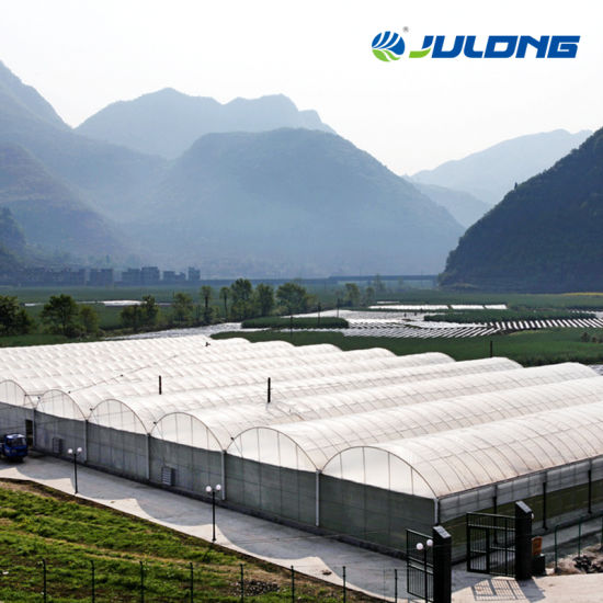 Agriculture Substantial Tunnel Galvanized Steel Cucumber Maxpower Greenhouse